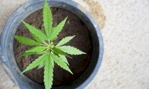 'La cannabis sul balcone? Non è una pianta di salvia o di peperoncino'