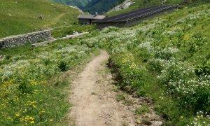 Tracciati sentieri abusivi sull'Alpe Seirasso: il Comune di Magliano Alpi presenta un esposto in procura