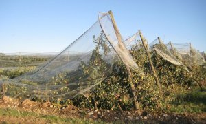 Assicurazioni, Confagricoltura: 'Agricoltori e allevatori cuneesi non possono più aspettare'