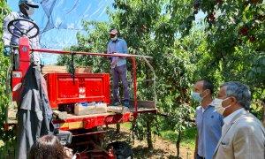 Icardi in visita nei frutteti del Saluzzese: 'Ingiusto parlare degli stagionali come di un problema'