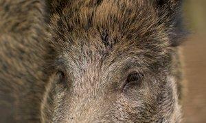 Fauna selvatica, positivo l'incontro tra Confagricoltura Cuneo e Provincia