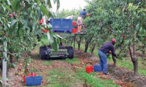 Stagionali della frutta, al via le 'accoglienze diffuse' nel Saluzzese