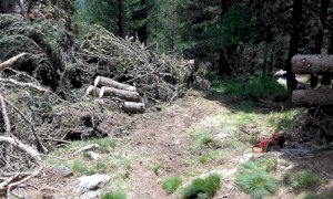 Eseguiti lavori di taglio e sgombero di tronchi di pino cembro nel Bosco dell'Alevè