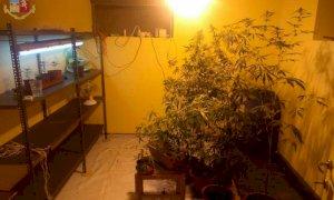 Trinità, 45enne coltivava cannabis tra le mura di casa: arrestato