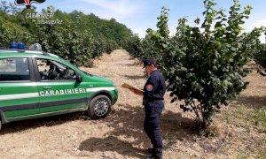 Impiegavano prodotti fitosanitari ad alta tossicità nei pressi di un asilo: multati