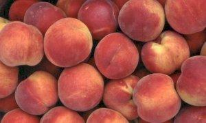 """Certificati fitosanitari, Confagricoltura: """"Snellire le procedure per le aziende della frutta"""""""