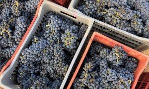 Accordo tra Vignaioli Piemontesi e le organizzazioni agricole per sostenere l'economia vitivinicola