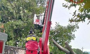 Margarita, intervento dei vigili del fuoco per la caduta di un albero sulla linea elettrica