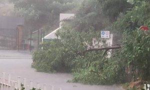 Nubifragio a Verzuolo, abbattuti alberi e pali della luce