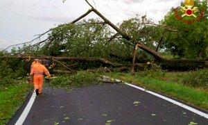 Il temporale sradica un albero tra Manta e Lagnasco: intervento dei pompieri per ripristinare i collegamenti