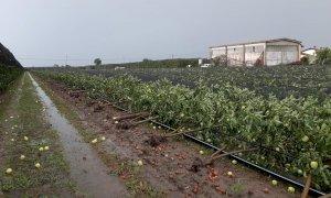 Tromba d'aria nel Saluzzese, Coldiretti: 'Interi frutteti sono stati cancellati'
