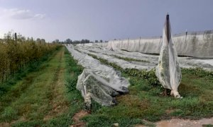 'Decine di migliaia di euro di danni per le aziende agricole cuneesi'