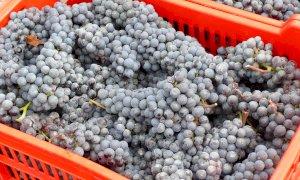 Camera di Commercio, approvati i parametri di rilevazione dei prezzi delle uve da vino Doc e Docg