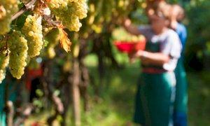Coldiretti Piemonte: 'Per le imprese agricole necessari voucher e quarantena attiva'