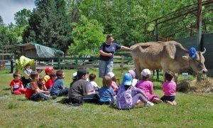 Coldiretti Piemonte: 'Oltre 200 aule nelle fattorie didattiche piemontesi'