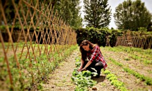 In arrivo sostegni per l'imprenditoria femminile in agricoltura, il commento di Confagricoltura