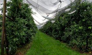 Coldiretti Piemonte: 'Gli sconvolgimenti climatici fanno calare i raccolti'