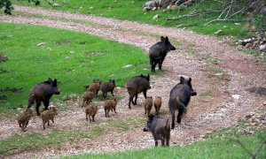 'L'incremento di fauna selvatica mette a dura prova l'allevamento. Risposte insufficienti dal governo'