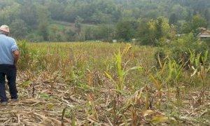 La Provincia cerca periti per accertamento e valutazione dei danni causati dalla fauna selvatica