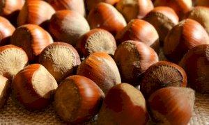 'I prezzi delle nocciole aumentano in Turchia e diminuiscono in Piemonte: assurdo'