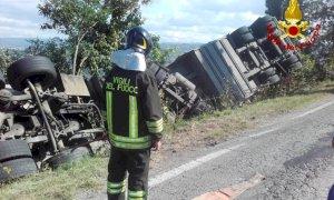 Camion si ribalta su un fianco a Barolo: 200 maiali morti sul colpo