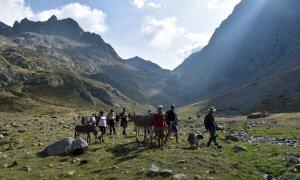 In cammino accompagnati dagli asini alla scoperta delle montagne tra Italia e Francia