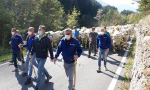 'Caluma el vache': la richiesta di attenzione dei margari simbolo di resistenza del settore agricolo