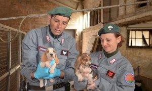 Traffico di cuccioli dall'Ungheria, due allevatori sotto processo