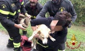 Cane cade in una gola ripida, salvato dai Vigili del fuoco