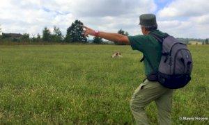 Due lupi ritrovati morti a Benevagienna, ispezione delle Unità Cinofile Antiveleno