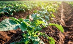 Agricoltura, la Regione eroga 113 milioni di anticipi PAC 2020