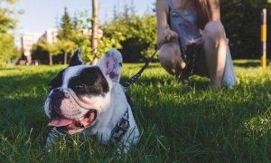Passeggiate con il cane: cosa si può fare in zona arancione?