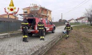 I pompieri salvano una volpe ferita a San Sebastiano di Fossano