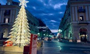 Cuneo, montato e acceso l'albero di Natale di piazza Galimberti