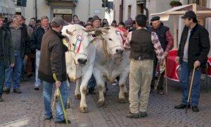 Un cortometraggio sulle tradizioni contadine di Carrù nel giorno della Fiera del Bue Grasso (VIDEO)