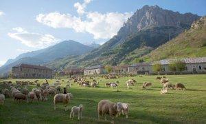Nasce da sette aziende della Valle Stura 'Montagnam', il marchio di prodotti agricoli di montagna