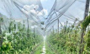 ''Più risorse e semplificazione per tutelare le aziende agricole dai rischi del clima''