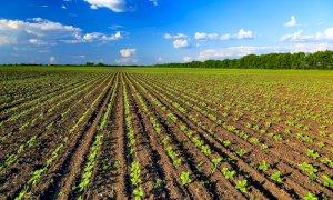 La Regione Piemonte convoca il primo tavolo del partenariato agroalimentare e rurale