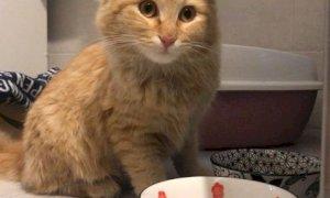 Si cerca il proprietario di un gattino smarrito a Cuneo