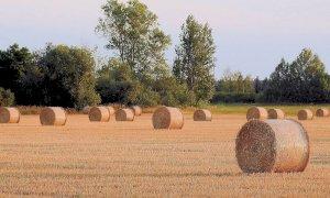 L'appello di Gioventù Nazionale: ''Non si trascuri il settore agricolo nei piani di rilancio''