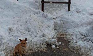 Abbandonato e legato al freddo, cane salvato dai volontari della LIDA a Villanova Mondovì