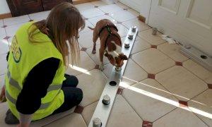 All'aeroporto di Levaldigi saranno impiegati cani 'anti Covid'