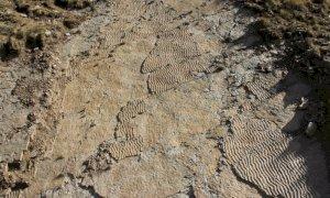 Impronte di grandi rettili risalenti a 250 milioni di anni fa ritrovate sull'altopiano della Gardetta