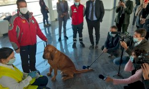 Cani anti-Covid, un progetto pilota unico in Italia all'aeroporto di Cuneo