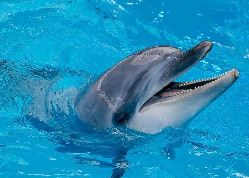 Il veterinario amico dei ricci: ''Ecco come ho salvato un delfino a Teheran''