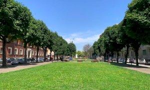Cuneo, operai al lavoro per la potatura degli alberi: cambia la viabilità di corso Dante
