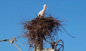 Racconigi, rimosso un nido di cicogne situato sopra un trasformatore di media tensione