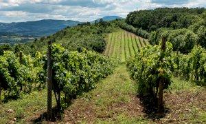 Coldiretti Piemonte:
