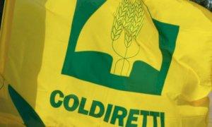 Coldiretti, Piano Qualità dell'Aria: ''Inviate le proposte per impedire il blocco delle produzioni alimentari''