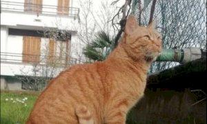 Gaspy si è smarrita a San Defendente di Cervasca: l'appello della sua famiglia